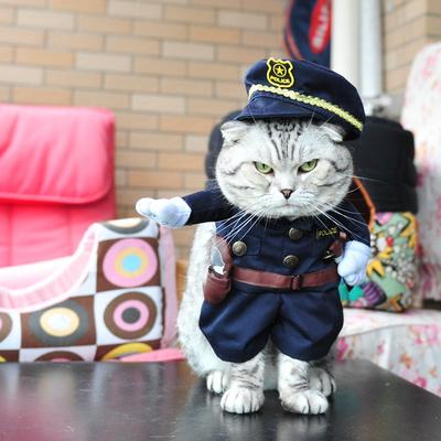 宠物猫交警